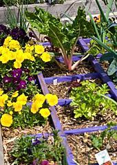 The edible garden planted last September.